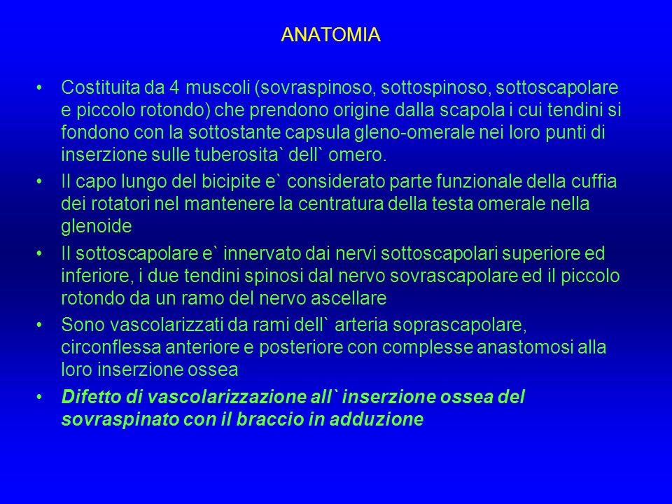 ANATOMIA Costituita da 4 muscoli (sovraspinoso, sottospinoso, sottoscapolare e piccolo rotondo) che prendono origine dalla scapola i cui tendini si fo