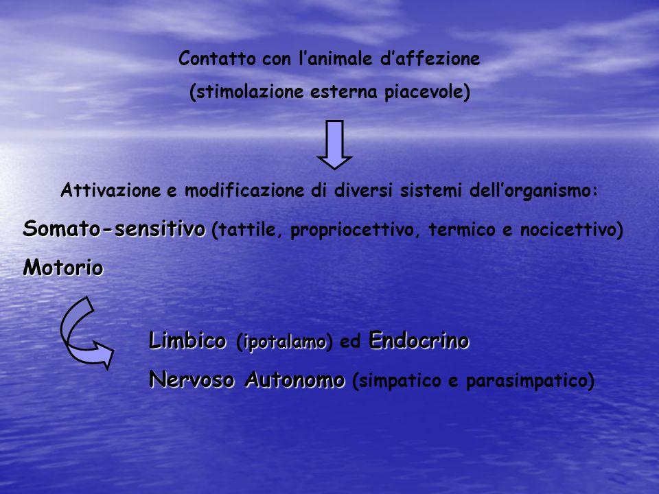 Contatto con lanimale daffezione (stimolazione esterna piacevole) Attivazione e modificazione di diversi sistemi dellorganismo: Somato-sensitivo Somat