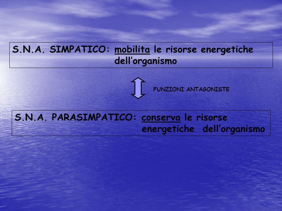 S.N.A. SIMPATICO: mobilita le risorse energetiche dellorganismo S.N.A. PARASIMPATICO: conserva le risorse energetiche dellorganismo FUNZIONI ANTAGONIS