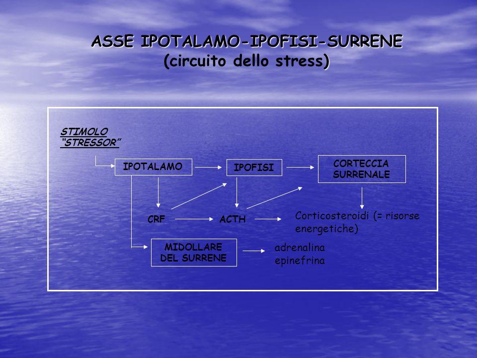 ASSE IPOTALAMO-IPOFISI-SURRENE ) (circuito dello stress) Corticosteroidi (= risorse energetiche) STIMOLO STRESSOR IPOFISI IPOTALAMO CORTECCIA SURRENAL