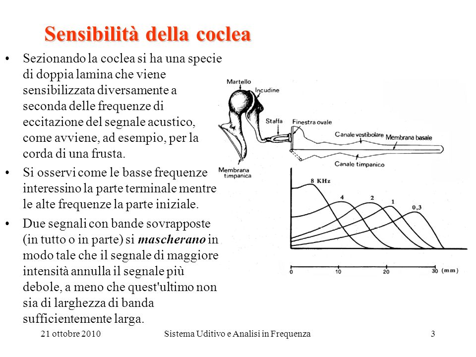 21 ottobre 2010Sistema Uditivo e Analisi in Frequenza4 Lacoclea La coclea Ad ogni punto della coclea corrisponde un valore ottimo della frequenza per il quale si ottiene la massima eccitazione.