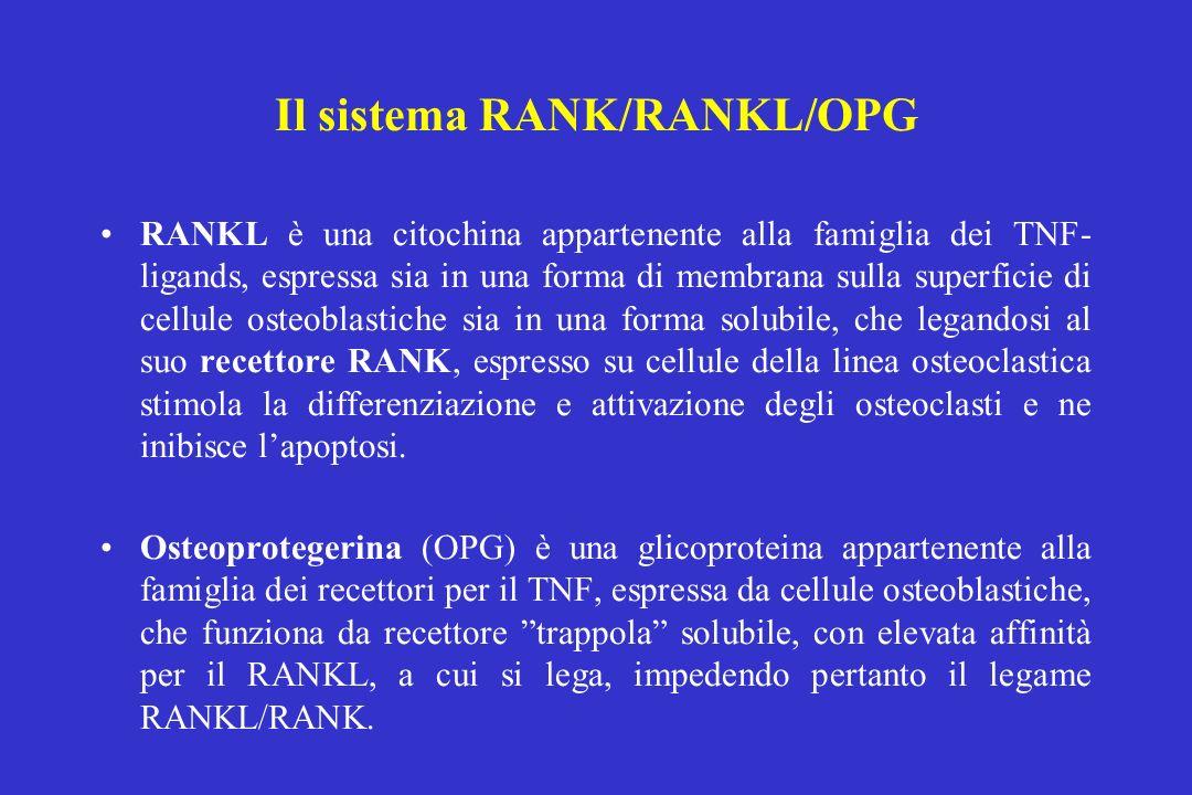RANKL è una citochina appartenente alla famiglia dei TNF- ligands, espressa sia in una forma di membrana sulla superficie di cellule osteoblastiche si