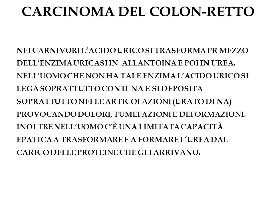 CARCINOMA DEL COLON-RETTO NEI CARNIVORI LACIDO URICO SI TRASFORMA PR MEZZO DELLENZIMA URICASI IN ALLANTOINA E POI IN UREA. NELLUOMO CHE NON HA TALE EN