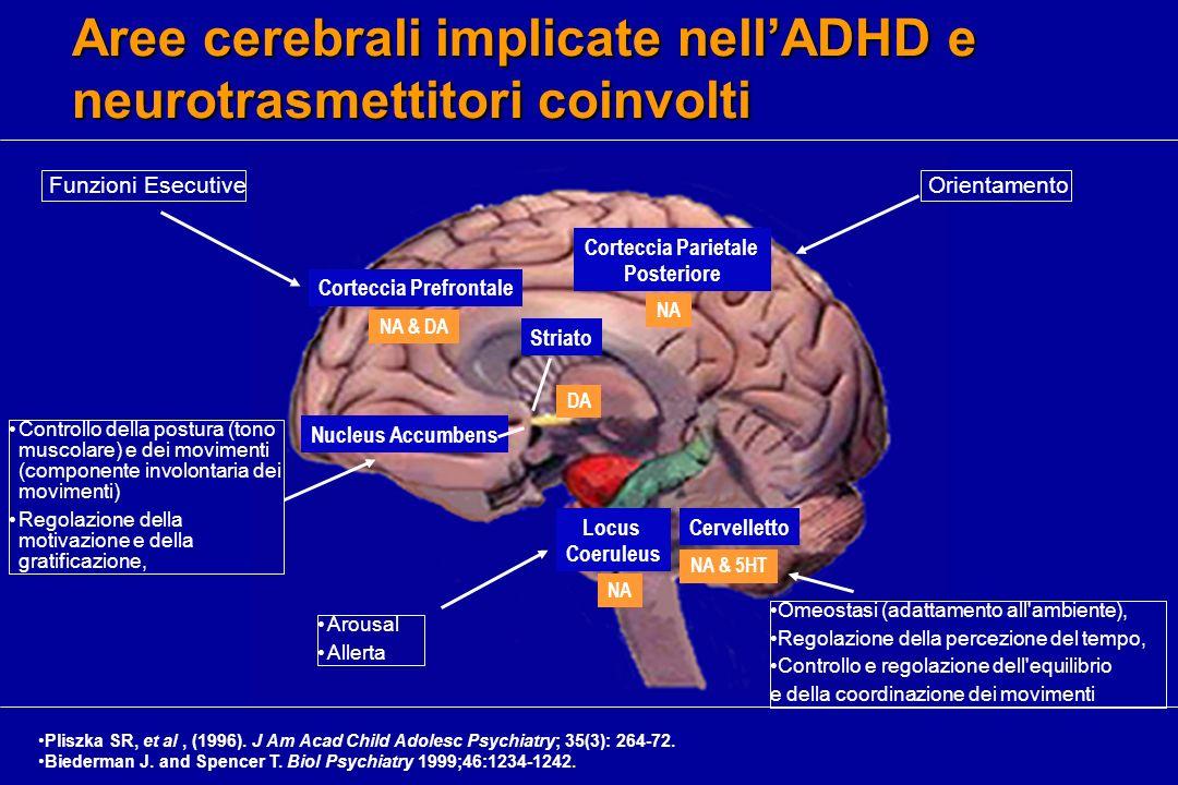 Aree cerebrali implicate nellADHD e neurotrasmettitori coinvolti Corteccia Prefrontale NA & DA Nucleus Accumbens Striato Corteccia Parietale Posterior