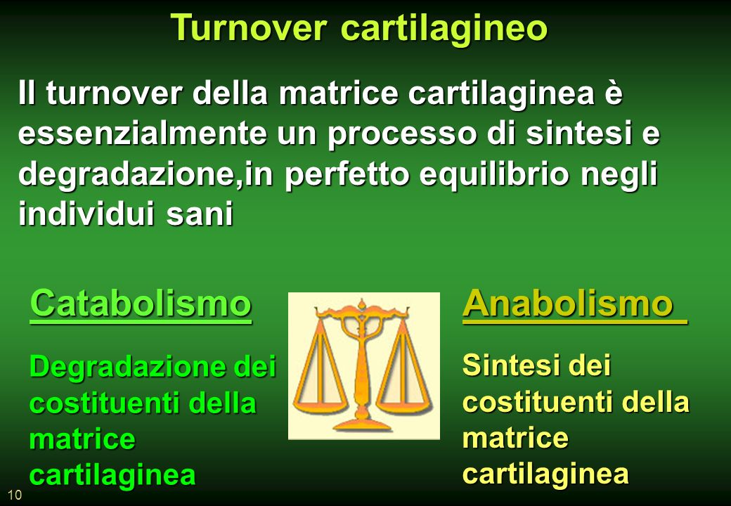 10 Il turnover della matrice cartilaginea è essenzialmente un processo di sintesi e degradazione,in perfetto equilibrio negli individui sani Turnover cartilagineo CatabolismoAnabolismo Sintesi dei costituenti della matrice cartilaginea Degradazione dei costituenti della matrice cartilaginea