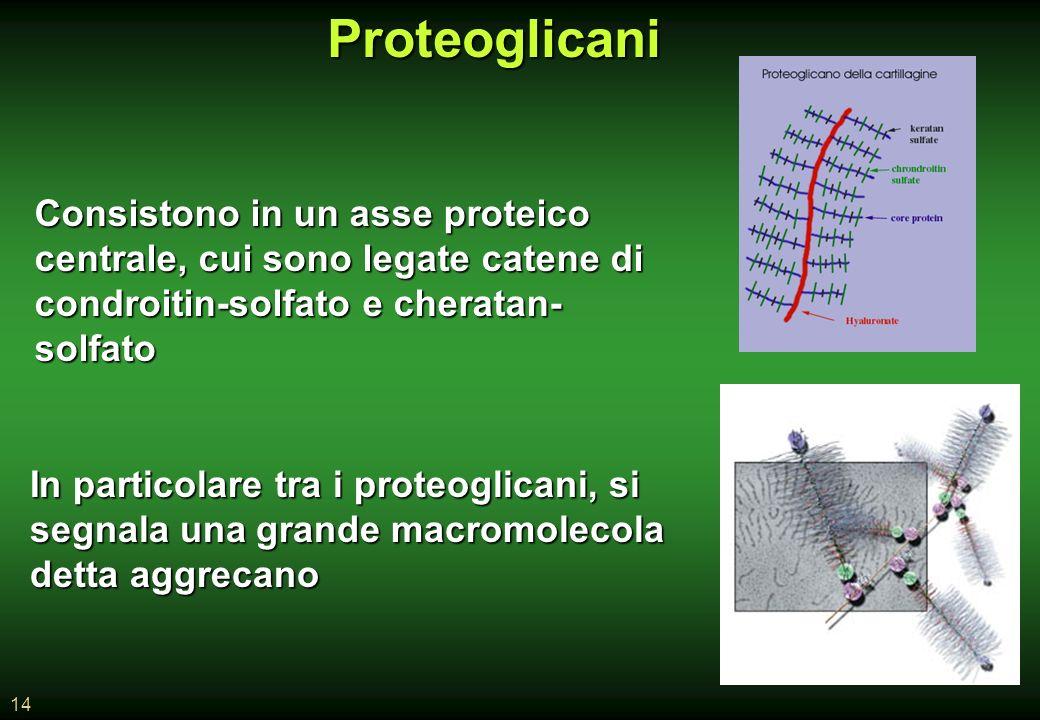 14Proteoglicani Consistono in un asse proteico centrale, cui sono legate catene di condroitin-solfato e cheratan- solfato In particolare tra i proteoglicani, si segnala una grande macromolecola detta aggrecano