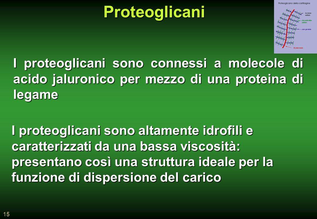 15Proteoglicani I proteoglicani sono connessi a molecole di acido jaluronico per mezzo di una proteina di legame I proteoglicani sono altamente idrofili e caratterizzati da una bassa viscosità: presentano così una struttura ideale per la funzione di dispersione del carico