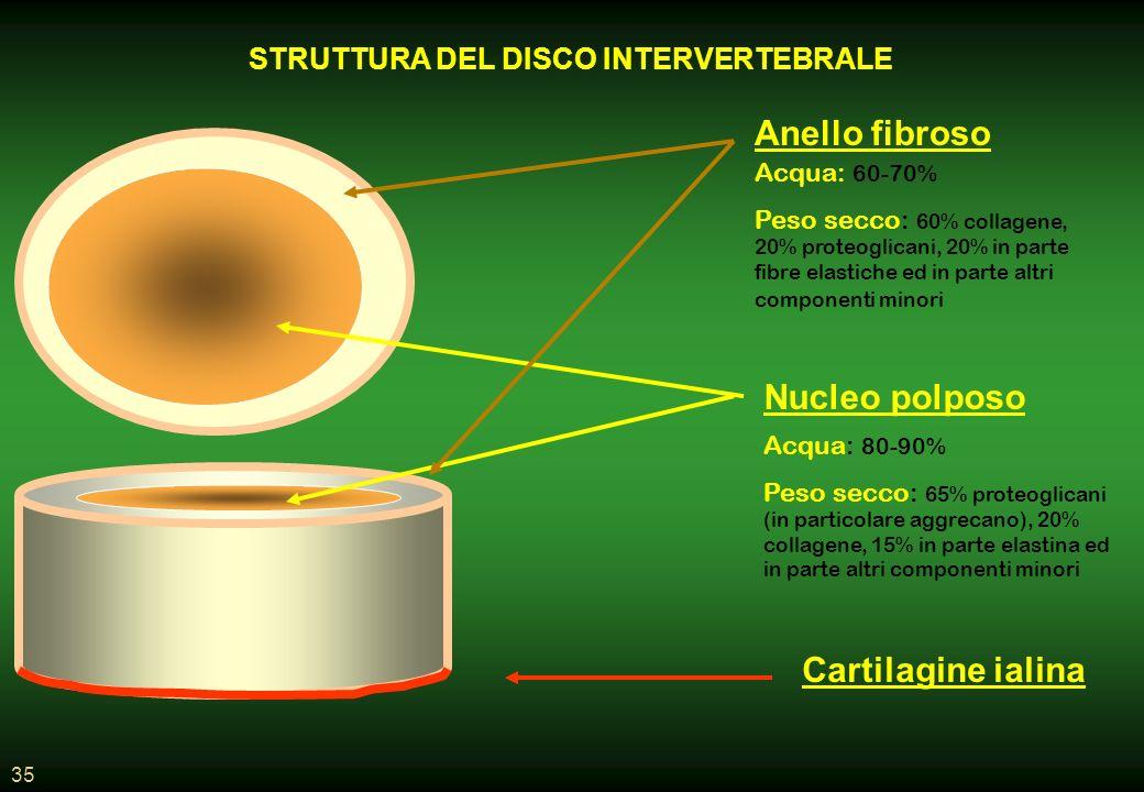 35 STRUTTURA DEL DISCO INTERVERTEBRALE Cartilagine ialina Nucleo polposo Anello fibroso Acqua: 80-90% Peso secco: 65% proteoglicani (in particolare aggrecano), 20% collagene, 15% in parte elastina ed in parte altri componenti minori Acqua: 60-70% Peso secco: 60% collagene, 20% proteoglicani, 20% in parte fibre elastiche ed in parte altri componenti minori
