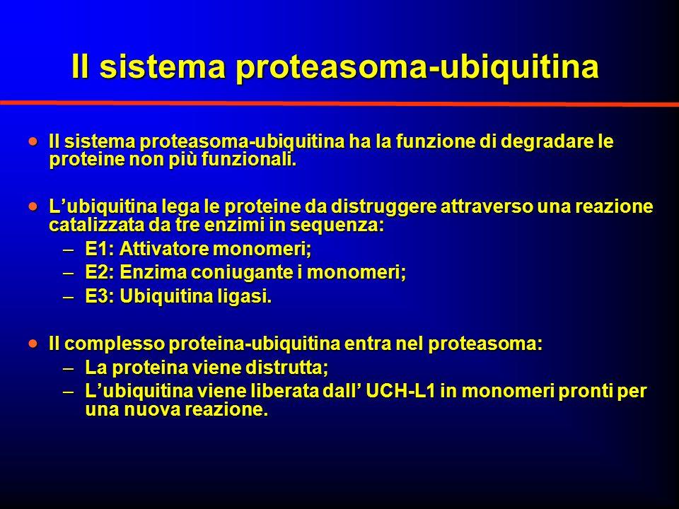 Il sistema proteasoma-ubiquitina Il sistema proteasoma-ubiquitina ha la funzione di degradare le proteine non più funzionali. Il sistema proteasoma-ub
