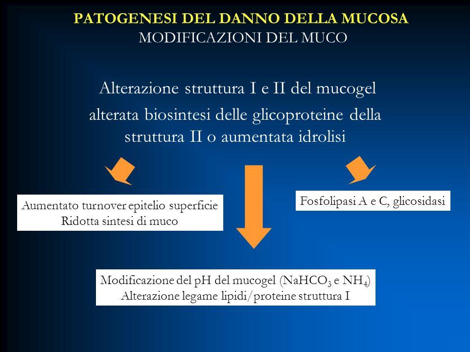 PATOGENESI DEL DANNO DELLA MUCOSA MODIFICAZIONI DEL MUCO Alterazione struttura I e II del mucogel alterata biosintesi delle glicoproteine della strutt