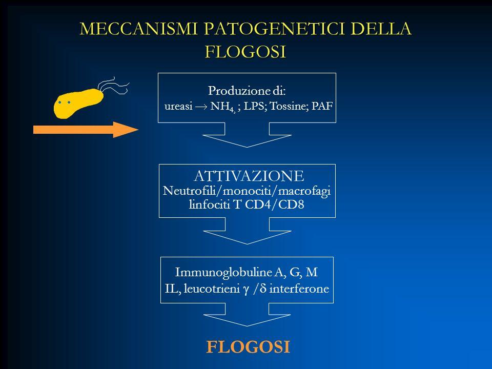 MECCANISMI PATOGENETICI DELLA FLOGOSI Produzione di: ureasi NH 4, ; LPS; Tossine; PAF ATTIVAZIONE Neutrofili/monociti/macrofagi linfociti T CD4/CD8 Im
