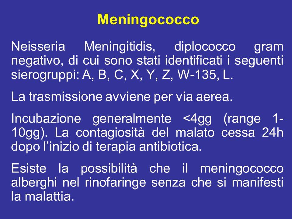 Meningite meningococcica Linfezione di solito causa soltanto una rinofaringite acuta o infezione subclinica delle vie respiratorie.