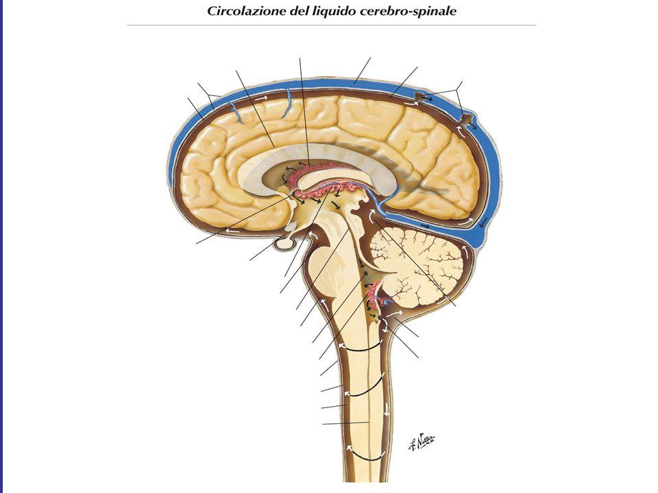 Meningiti Batteriche : Clinica Quasi tutti i pazienti con meningite presentano almeno 2 di questi sintomi: Cefalea Febbre alta Rigor nucalis (talvolta assente negli anziani) o altri segni di irritazione meningea Alterazioni dello stato di coscienza.
