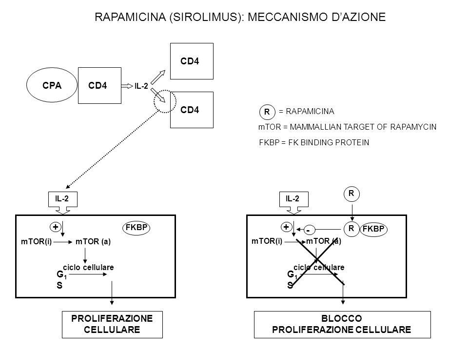 IL-2 CPACD4 IL-2 mTOR(i) mTOR (a) ciclo cellulare G1SG1S PROLIFERAZIONE CELLULARE + FKBP IL-2 mTOR(i) mTOR (a) ciclo cellulare G1SG1S BLOCCO PROLIFERAZIONE CELLULARE + FKBP R R - R = RAPAMICINA mTOR = MAMMALLIAN TARGET OF RAPAMYCIN FKBP = FK BINDING PROTEIN RAPAMICINA (SIROLIMUS): MECCANISMO DAZIONE