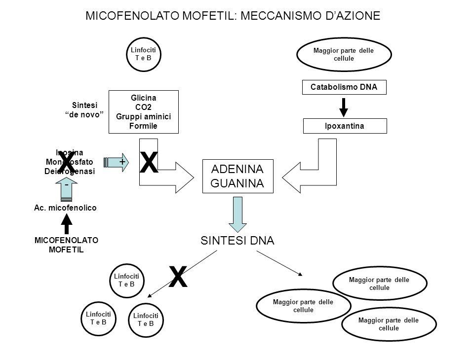 MICOFENOLATO MOFETIL: MECCANISMO DAZIONE Linfociti T e B Glicina CO2 Gruppi aminici Formile Maggior parte delle cellule Catabolismo DNA Ipoxantina ADENINA GUANINA SINTESI DNA Linfociti T e B Maggior parte delle cellule Sintesi de novo Inosina Monofosfato Deidrogenasi + X X X - Ac.