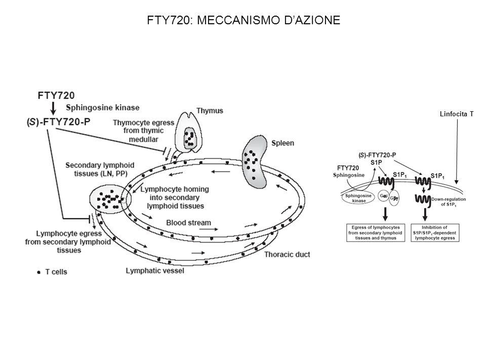 FTY720: MECCANISMO DAZIONE Linfocita T