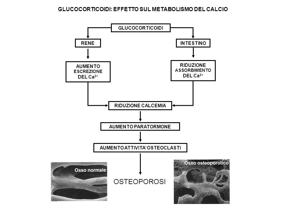 RENEINTESTINO GLUCOCORTICOIDI AUMENTO ESCREZIONE DEL Ca 2+ RIDUZIONE ASSORBIMENTO DEL Ca 2+ RIDUZIONE CALCEMIA AUMENTO ATTIVITA OSTEOCLASTI AUMENTO PA