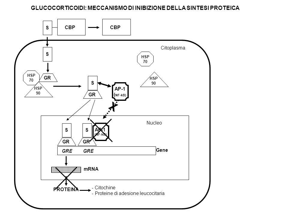 GLUCOCORTICOIDI: MECCANISMO DI INIBIZIONE DELLA SINTESI PROTEICA Citoplasma - Citochine - Proteine di adesione leucocitaria S GR S GRE Gene mRNA PROTE
