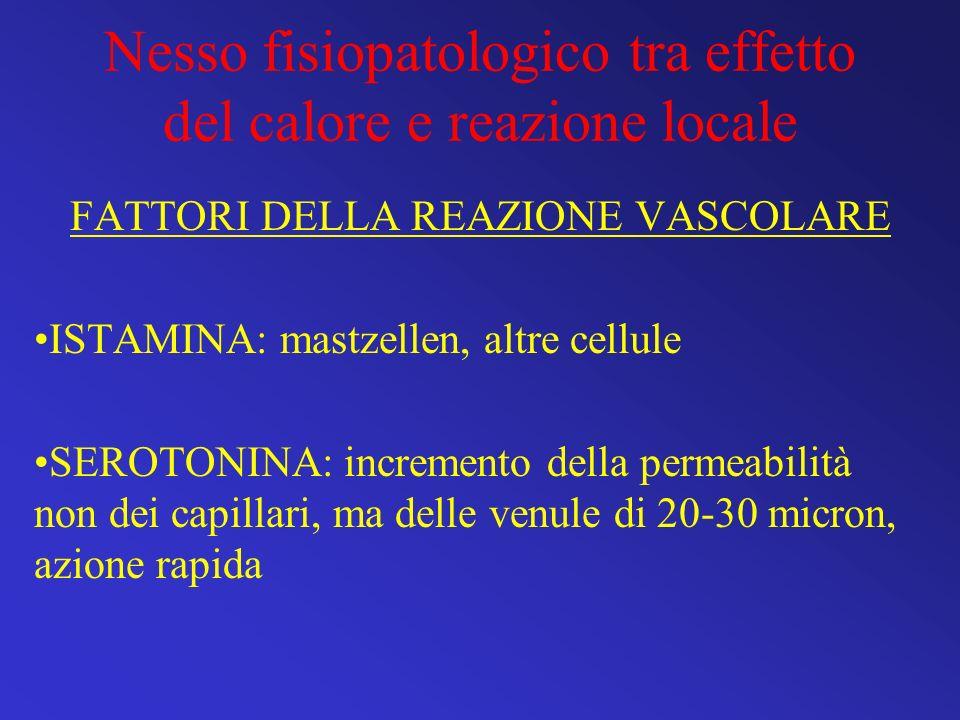 Nesso fisiopatologico tra effetto del calore e reazione locale FATTORI DELLA REAZIONE VASCOLARE ISTAMINA: mastzellen, altre cellule SEROTONINA: increm