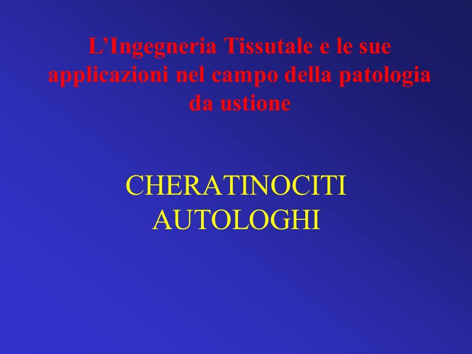 CHERATINOCITI AUTOLOGHI LIngegneria Tissutale e le sue applicazioni nel campo della patologia da ustione