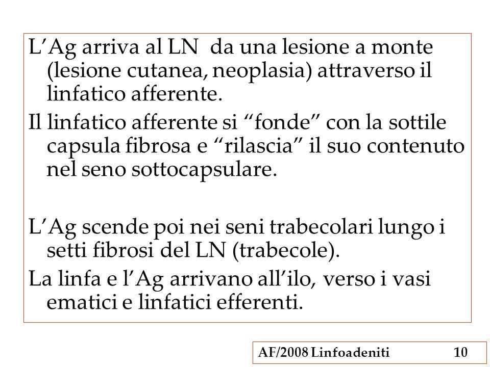 AF/2008 Linfoadeniti10 LAg arriva al LN da una lesione a monte (lesione cutanea, neoplasia) attraverso il linfatico afferente. Il linfatico afferente