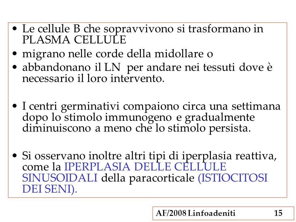AF/2008 Linfoadeniti15 Le cellule B che sopravvivono si trasformano in PLASMA CELLULE migrano nelle corde della midollare o abbandonano il LN per anda