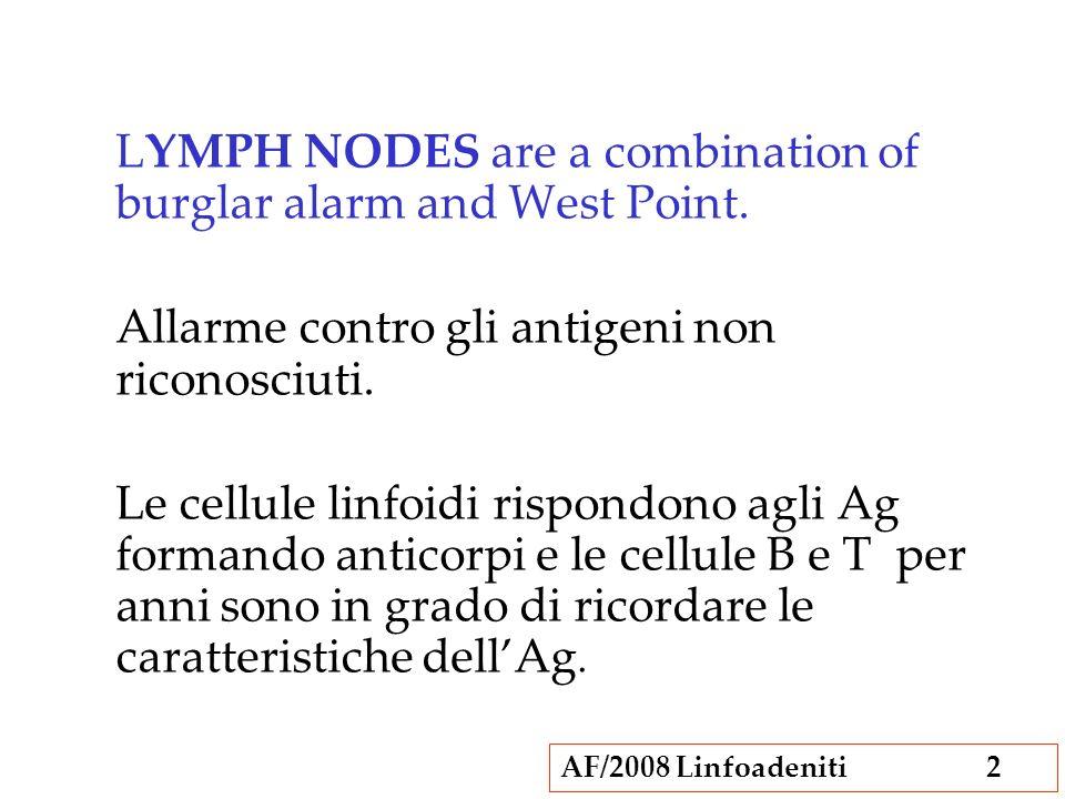 AF/2008 Linfoadeniti3 Capsula Seni sottocapsulari (marginali) Cordoni della midollare Linfatici afferenti ed efferenti Follicoli Centri germinali Area parafollicolare Venule con endotelio alto Strutture anatomiche del linfonodo