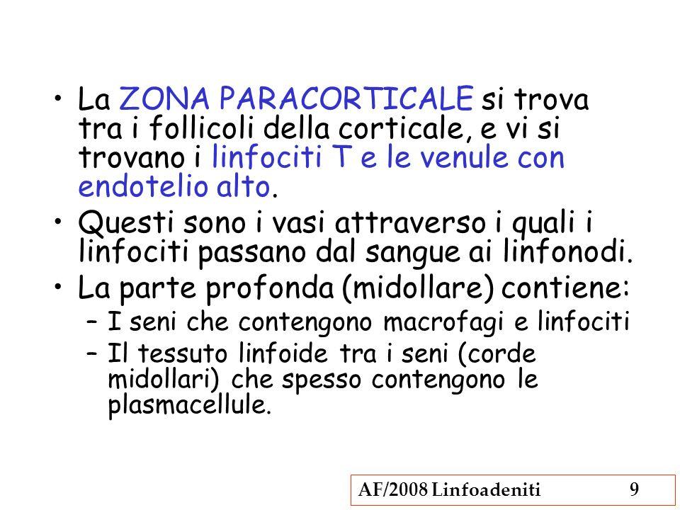 AF/2008 Linfoadeniti9 La ZONA PARACORTICALE si trova tra i follicoli della corticale, e vi si trovano i linfociti T e le venule con endotelio alto. Qu
