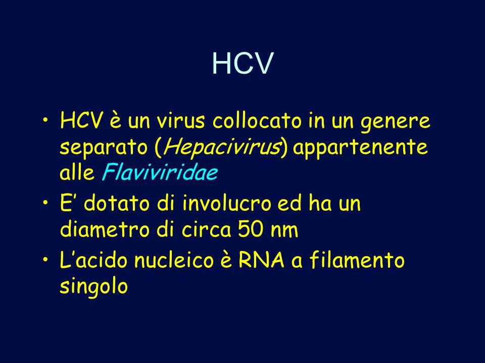 HCV HCV è un virus collocato in un genere separato (Hepacivirus) appartenente alle Flaviviridae E dotato di involucro ed ha un diametro di circa 50 nm