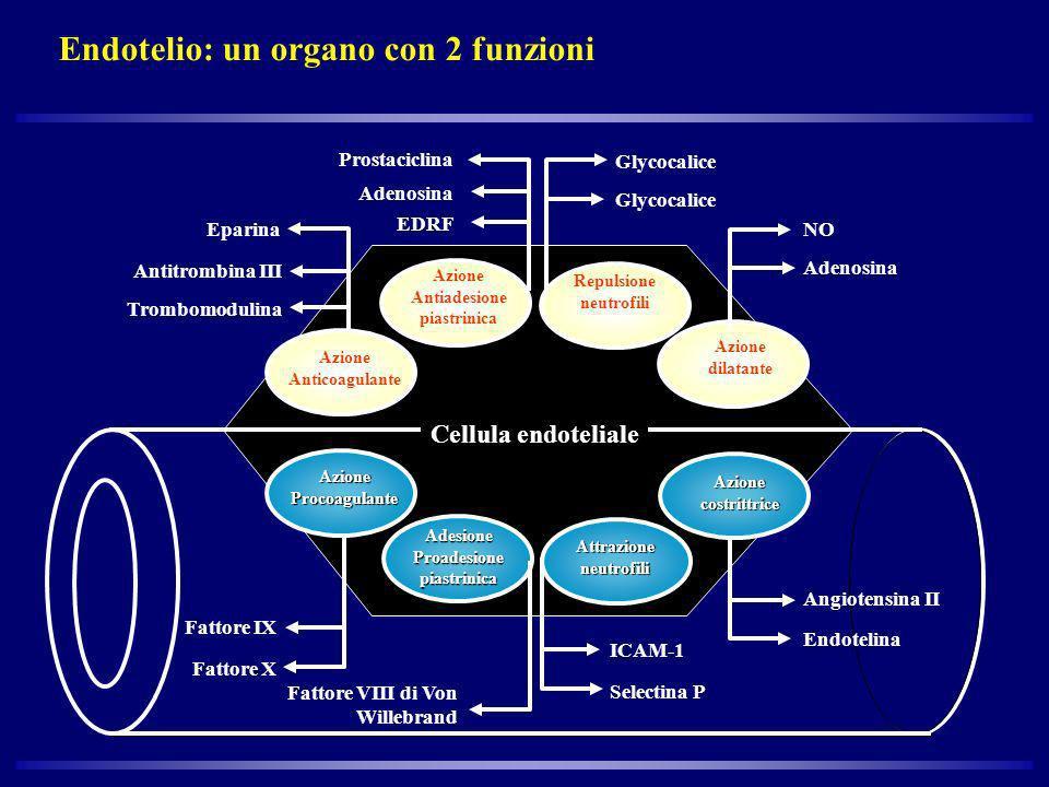 Endotelio: un organo con 2 funzioni Azione Anticoagulante Azione Antiadesione piastrinica Prostaciclina Adenosina EDRF Glycocalice Repulsione neutrofi