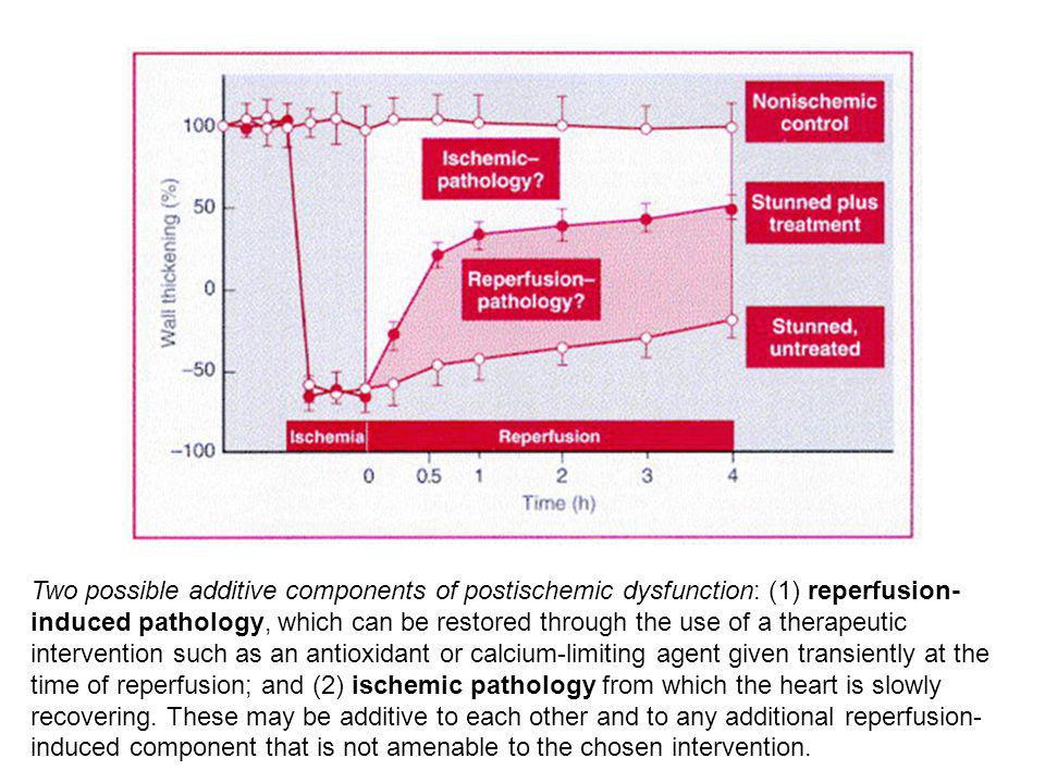 Two possible additive components of postischemic dysfunction: (1) reperfusion- induced pathology, which can be restored through the use of a therapeut