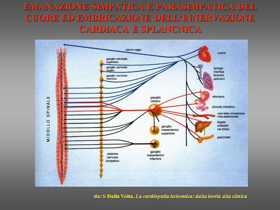 EMANAZIONE SIMPATICA E PARASIMPATICA DEL CUORE ED EMBRICAZIONE DELLINNERVAZIONE CARDIACA E SPLANCNICA da: S Dalla Volta. La cardiopatia ischemica: dal