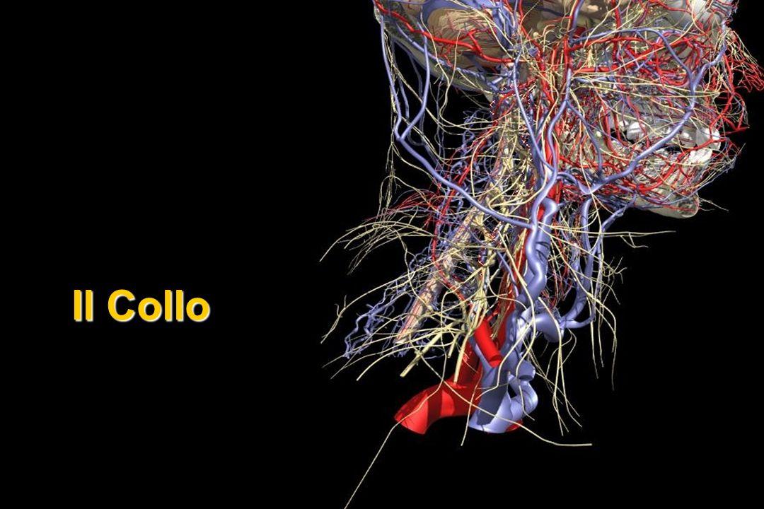 Tumori Maligni% Linfoma H31 Linfoma NH26 Rabdomiosarcoma15 Altri sarcomi 8 Ca tiroide 8 Ca rinofaringe 5 Neuroblastoma 4 Ca ghiandole salivari 2 Teratoma maligno <1