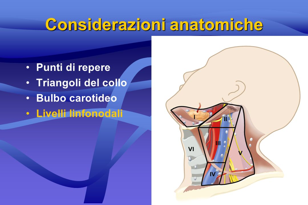 Punti di repere Triangoli del collo Bulbo carotideo Livelli linfonodali Considerazioni anatomiche