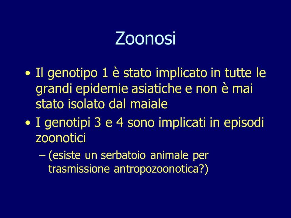 Zoonosi Il genotipo 1 è stato implicato in tutte le grandi epidemie asiatiche e non è mai stato isolato dal maiale I genotipi 3 e 4 sono implicati in