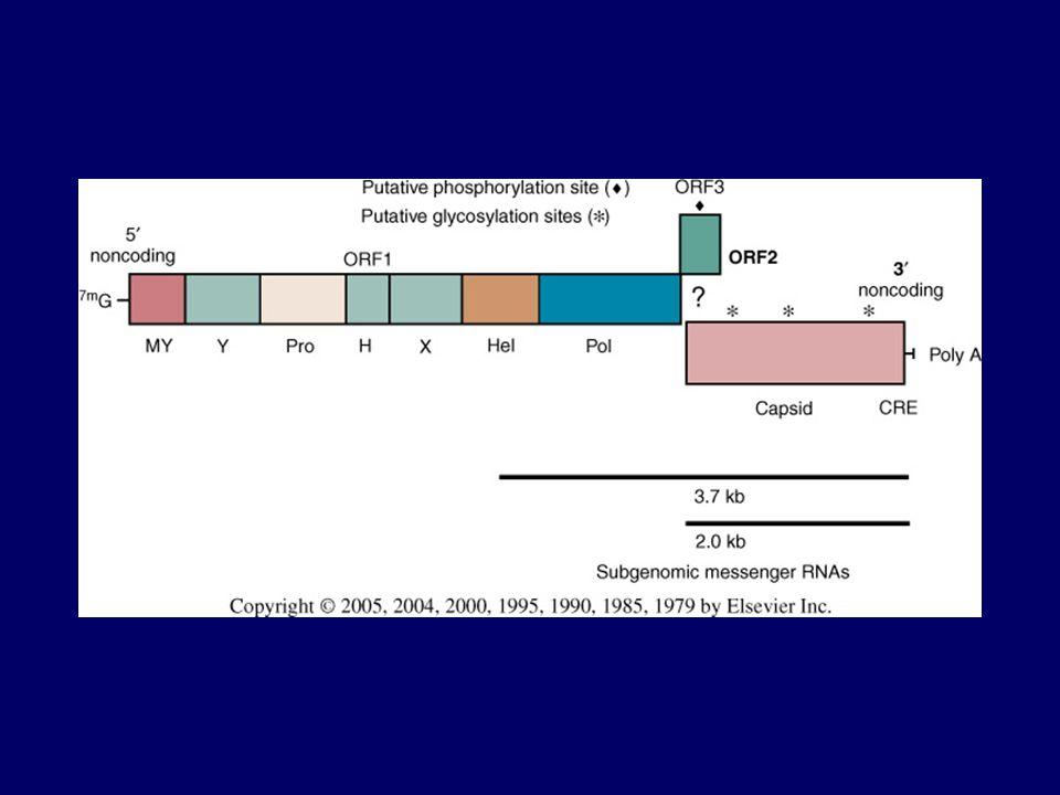 Diagnosi Reazioni sierologiche –ELISA, WB Diagnosi diretta –RT-PCR su siero e feci