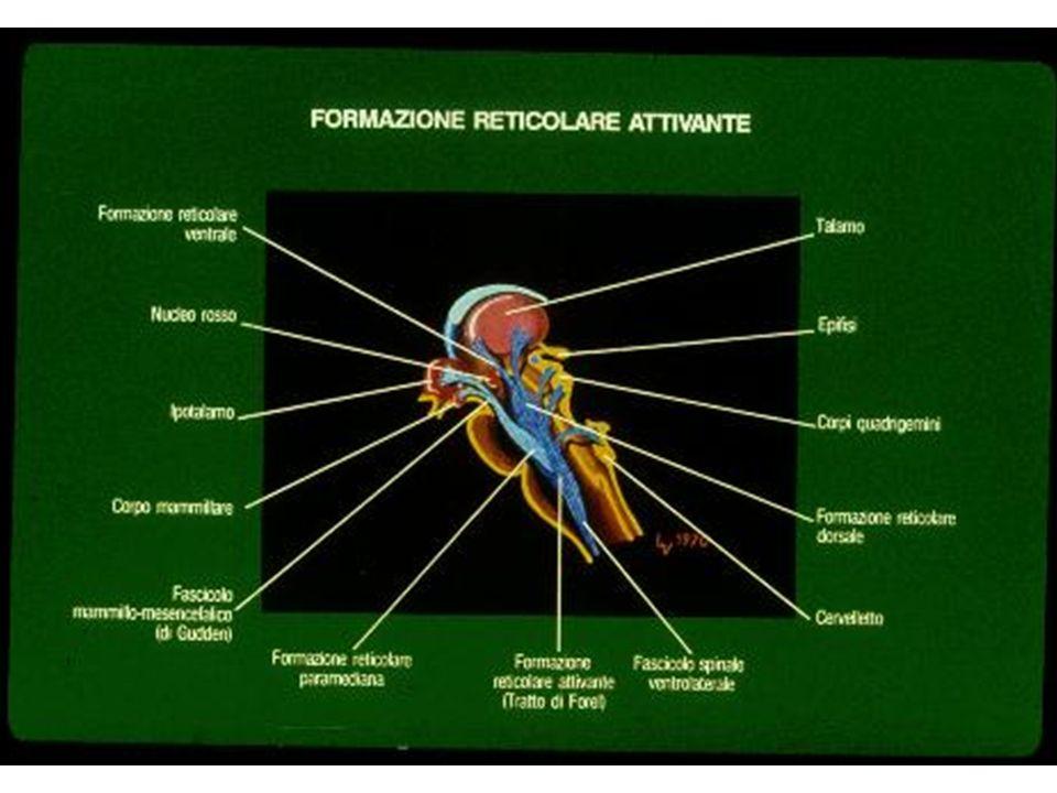 Accertamento morte cerebrale Commissione di 3 esperti: Anestesista, neurologo esperto di EEG, medico legale Presenza di lesioni cerebrali distruttive, assenza di ipotermia e di tossici Assenza di respiro spontaneo (in presenza di ipercapnia), assenza dei riflessi del tronco encefalico (fotomotore, corneale, cilio-spinale, oculo-cefalici e oculo-vestibolari, faringeo e della tosse) Possono persistere i riflessi spinali.