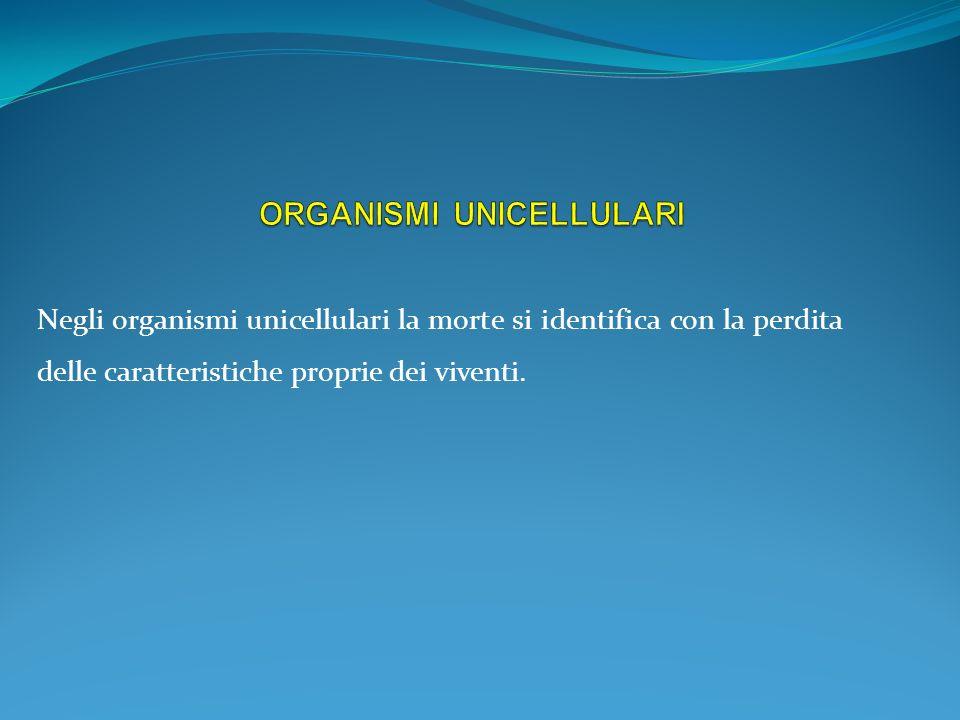 Negli organismi unicellulari la morte si identifica con la perdita delle caratteristiche proprie dei viventi.