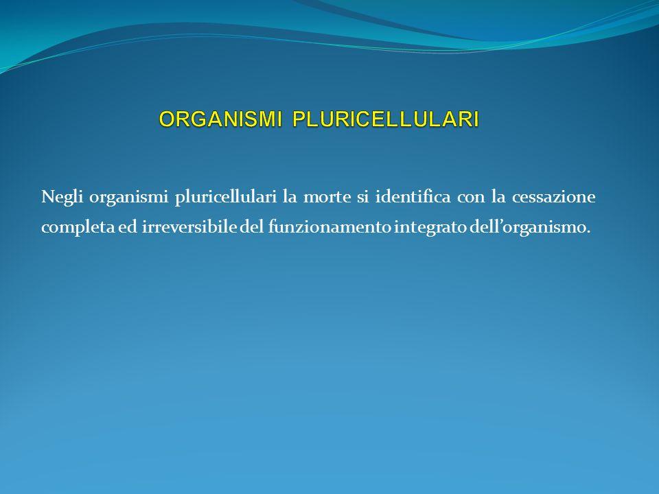 Negli organismi pluricellulari la morte si identifica con la cessazione completa ed irreversibile del funzionamento integrato dellorganismo.