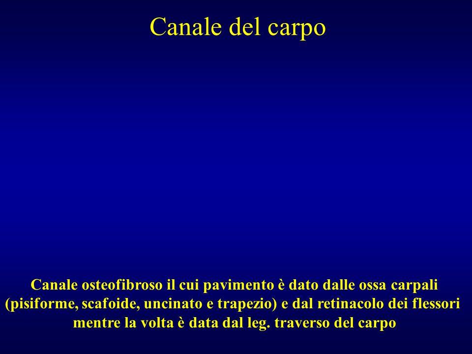 Canale del carpo Canale osteofibroso il cui pavimento è dato dalle ossa carpali (pisiforme, scafoide, uncinato e trapezio) e dal retinacolo dei flesso