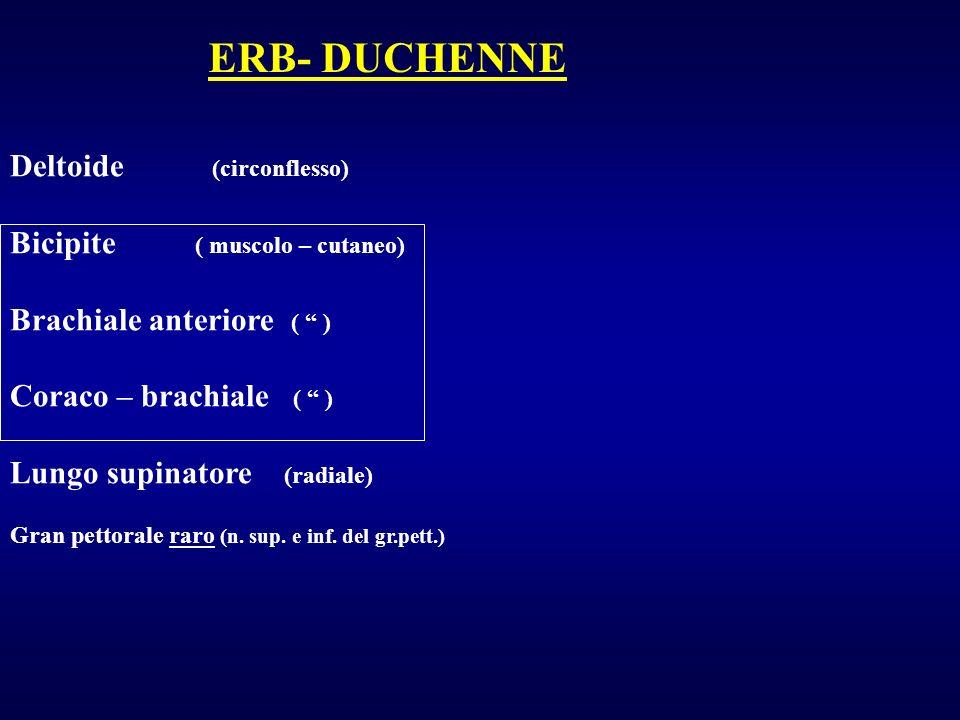 Deltoide (circonflesso) Bicipite ( muscolo – cutaneo) Brachiale anteriore ( ) Coraco – brachiale ( ) Lungo supinatore (radiale) Gran pettorale raro (n