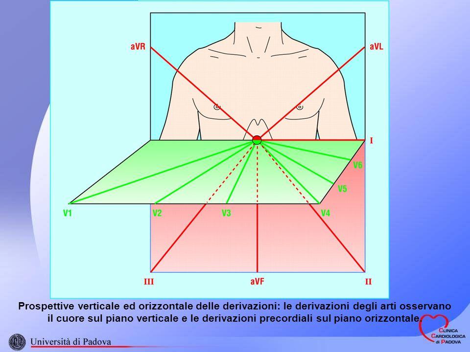 Prospettive verticale ed orizzontale delle derivazioni: le derivazioni degli arti osservano il cuore sul piano verticale e le derivazioni precordiali