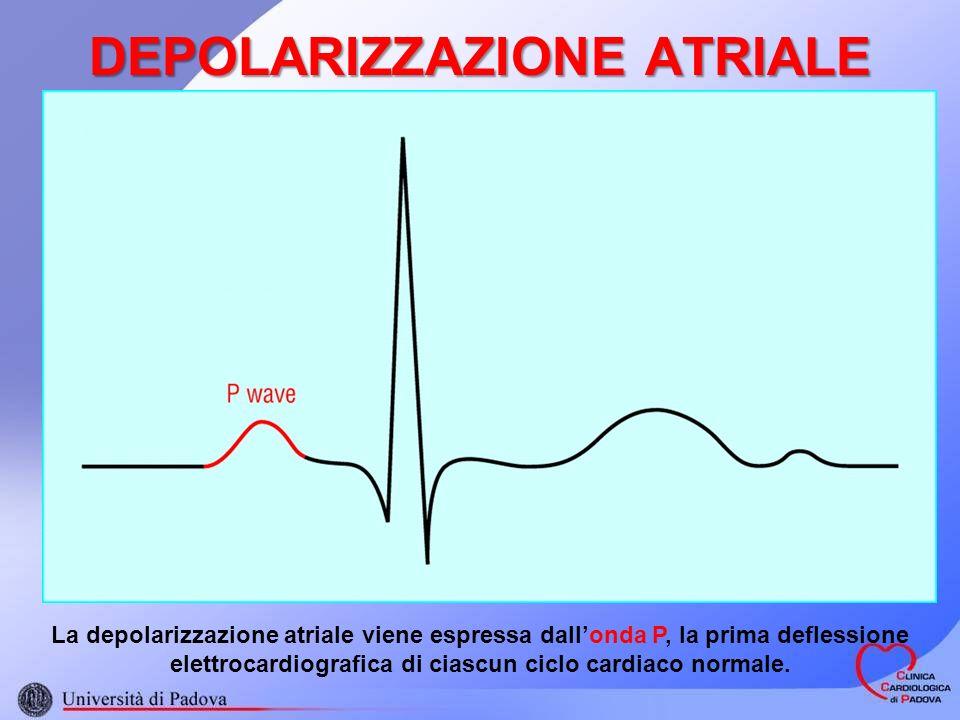 DEPOLARIZZAZIONE ATRIALE La depolarizzazione atriale viene espressa dallonda P, la prima deflessione elettrocardiografica di ciascun ciclo cardiaco normale.