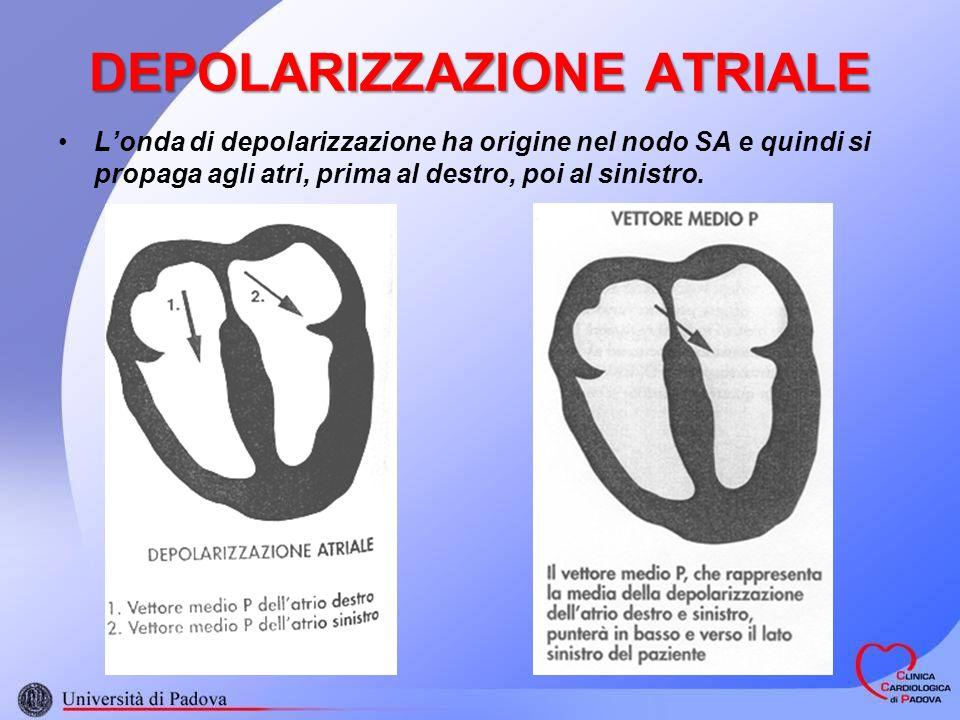 Londa di depolarizzazione ha origine nel nodo SA e quindi si propaga agli atri, prima al destro, poi al sinistro. DEPOLARIZZAZIONE ATRIALE