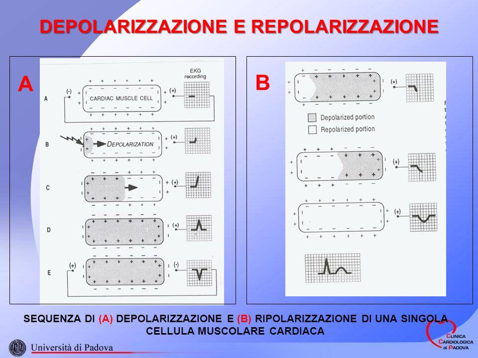 DEPOLARIZZAZIONE E REPOLARIZZAZIONE SEQUENZA DI (A) DEPOLARIZZAZIONE E (B) RIPOLARIZZAZIONE DI UNA SINGOLA CELLULA MUSCOLARE CARDIACA A B
