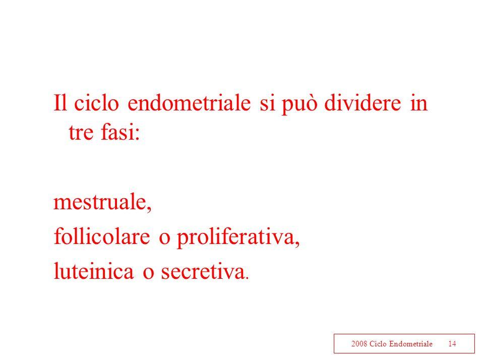 2008 Ciclo Endometriale14 Il ciclo endometriale si può dividere in tre fasi: mestruale, follicolare o proliferativa, luteinica o secretiva.