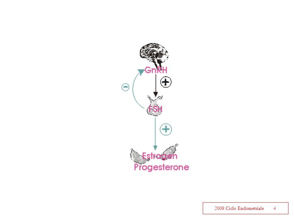 2008 Ciclo Endometriale4