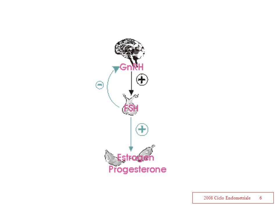 2008 Ciclo Endometriale6