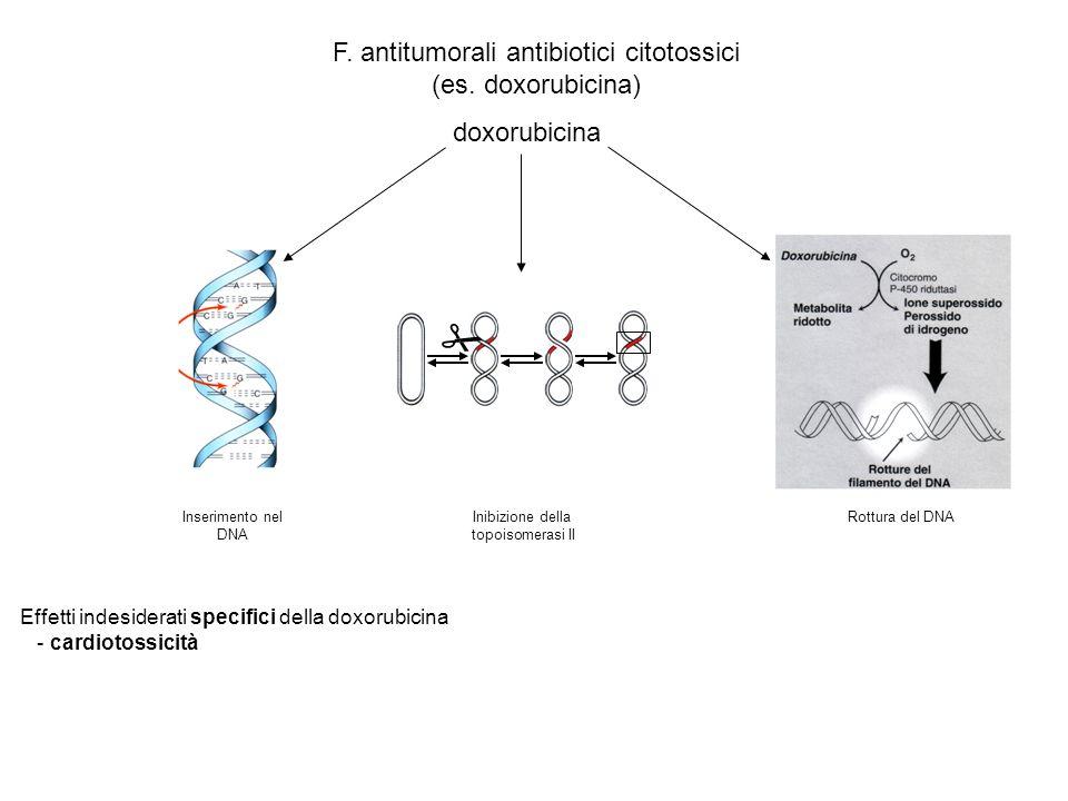 F. antitumorali antibiotici citotossici (es. doxorubicina) doxorubicina Inserimento nel DNA Inibizione della topoisomerasi II Rottura del DNA Effetti