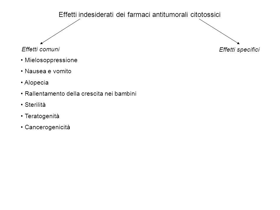 Effetti indesiderati dei farmaci antitumorali citotossici Mielosoppressione Nausea e vomito Alopecia Rallentamento della crescita nei bambini Sterilit